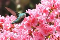 <h2></h2><p>Humming Bird feeding. </p>